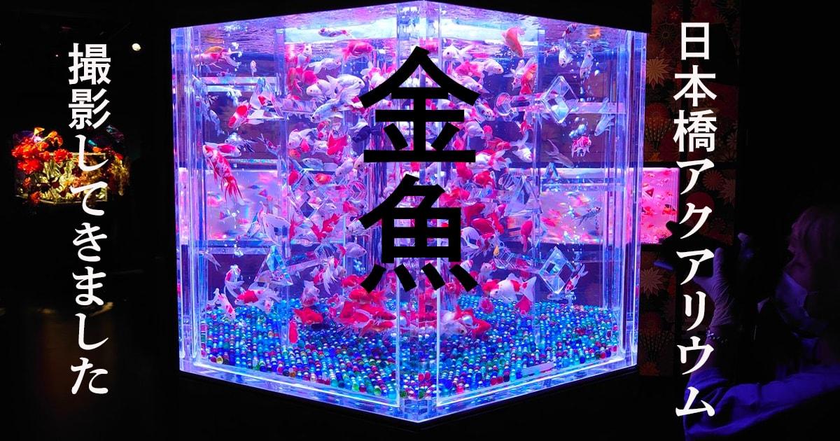 【17枚の写真あり】日本橋アートアクアリウムで金魚を撮影してきた!